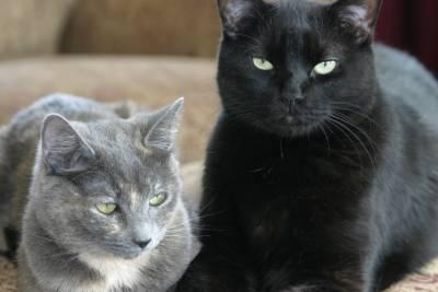 cats on ottoman
