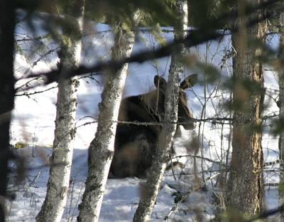 moose-visit.jpg