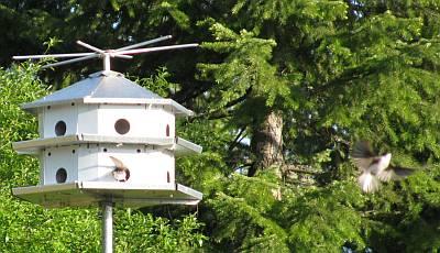 bird-house.jpg
