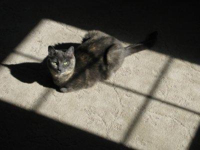 kitty-01.jpg