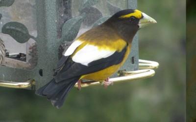 bird.photo